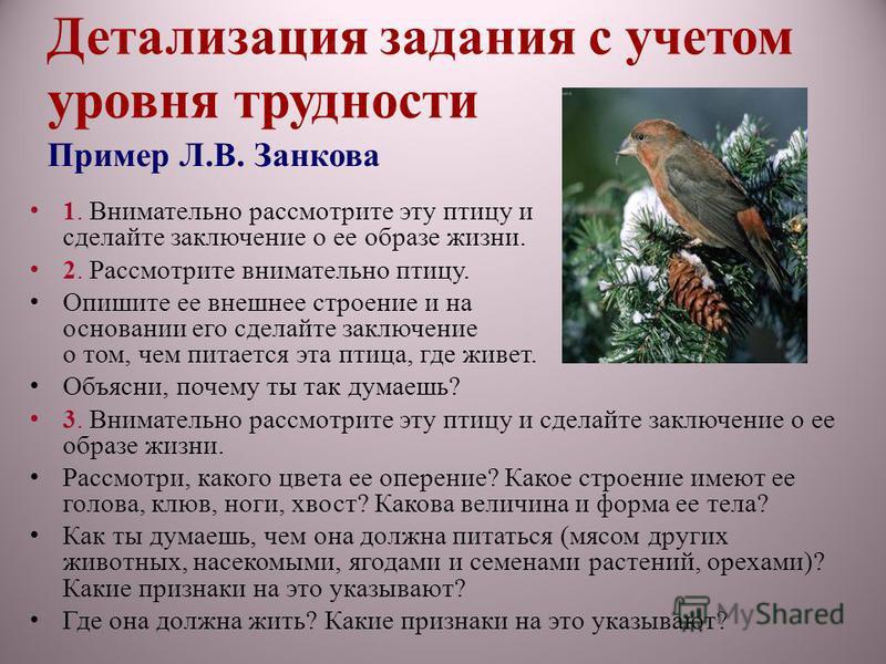 Детализация задания с учетом уровня трудности Пример Л.В. Занкова 1. Внимательно рассмотрите эту птицу и сделайте заключение о ее образе жизни. 2. Рассмотрите внимательно птицу. Опишите ее внешнее строение и на основании его сделайте заключение о том