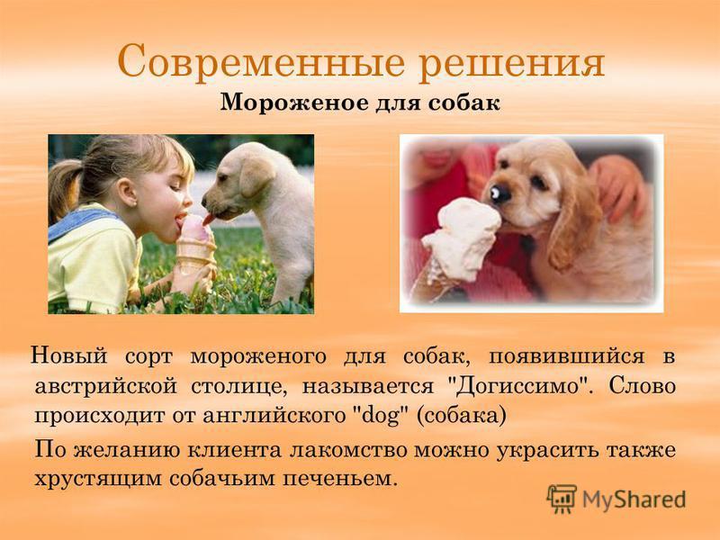 Современные решения Новый сорт мороженого для собак, появившийся в австрийской столице, называется