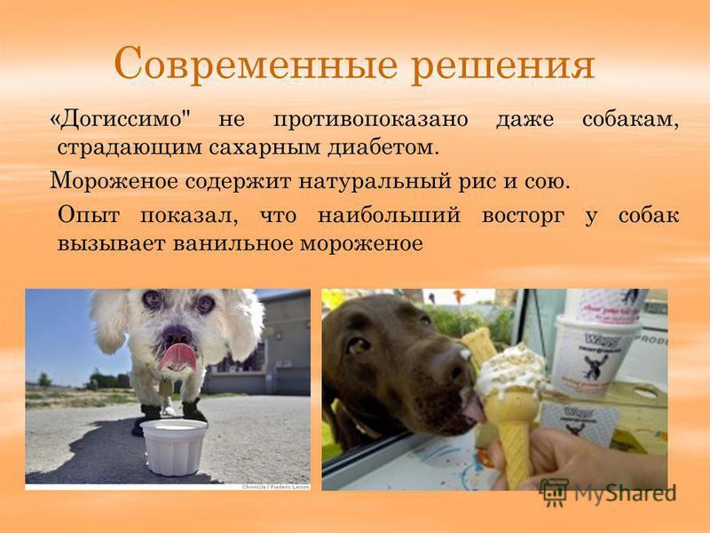 Современные решения «Догиссимо не противопоказано даже собакам, страдающим сахарным диабетом. Мороженое содержит натуральный рис и сою. Опыт показал, что наибольший восторг у собак вызывает ванильное мороженое