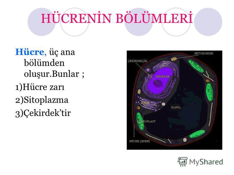 HÜCRENİN BÖLÜMLERİ Hücre, üç ana bölümden oluşur.Bunlar ; 1)Hücre zarı 2)Sitoplazma 3)Çekirdektir