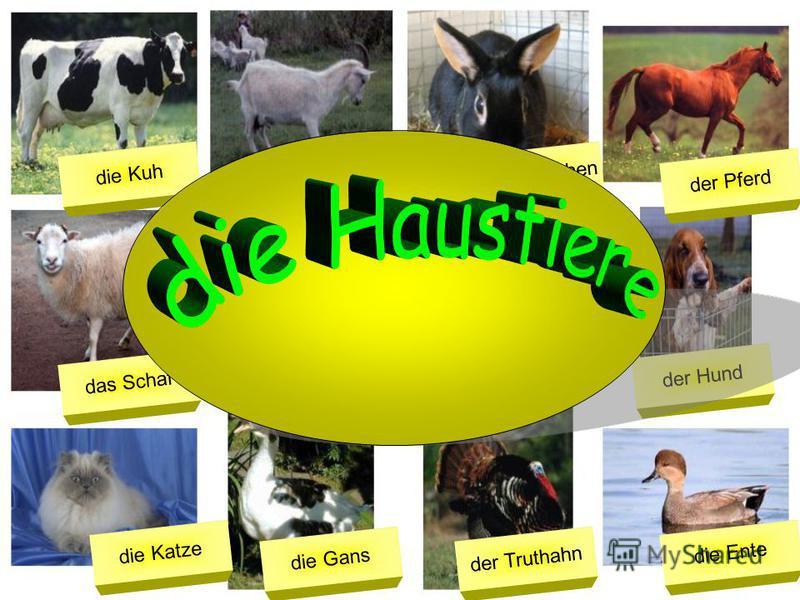 die Kuh das Schaf die Katze die Ziege der Esel die Gans das Kaninchen das Schwein der Truthahn der Pferd der Hund die Ente