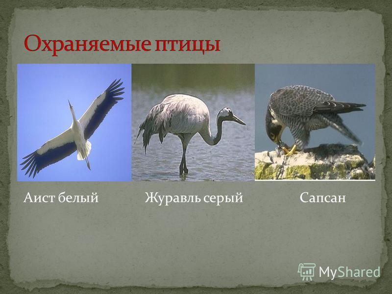 Аист белый Журавль серый Сапсан