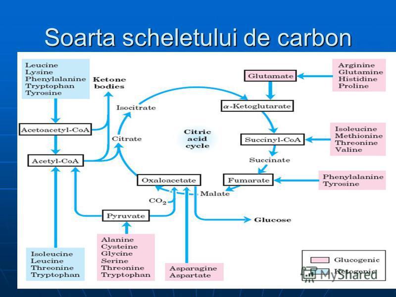 Soarta scheletului de carbon
