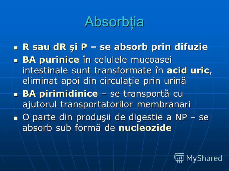Absorbţia R sau dR şi P – se absorb prin difuzie R sau dR şi P – se absorb prin difuzie BA purinice în celulele mucoasei intestinale sunt transformate în acid uric, eliminat apoi din circulaţie prin urină BA purinice în celulele mucoasei intestinale