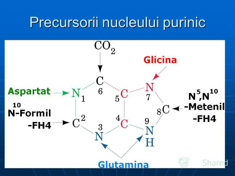 Precursorii nucleului purinic