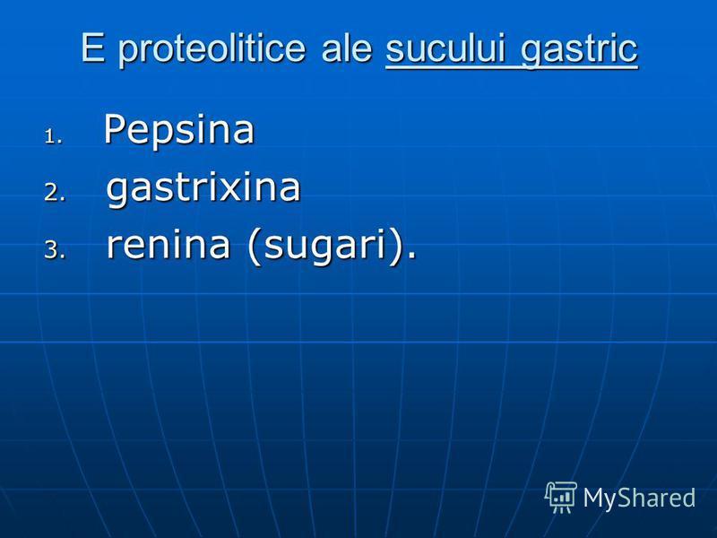 E proteolitice ale sucului gastric 1. Pepsina 2. gastrixina 3. renina (sugari).