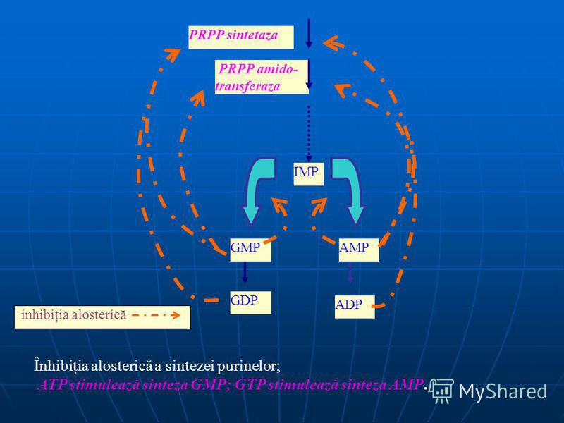 inhibiţia alosterică PRPP sintetaza PRPP amido- transferaza IMP GMPAMP GDP ADP Înhibiţia alosterică a sintezei purinelor; ATP stimulează sinteza GMP; GTP stimulează sinteza AMP.