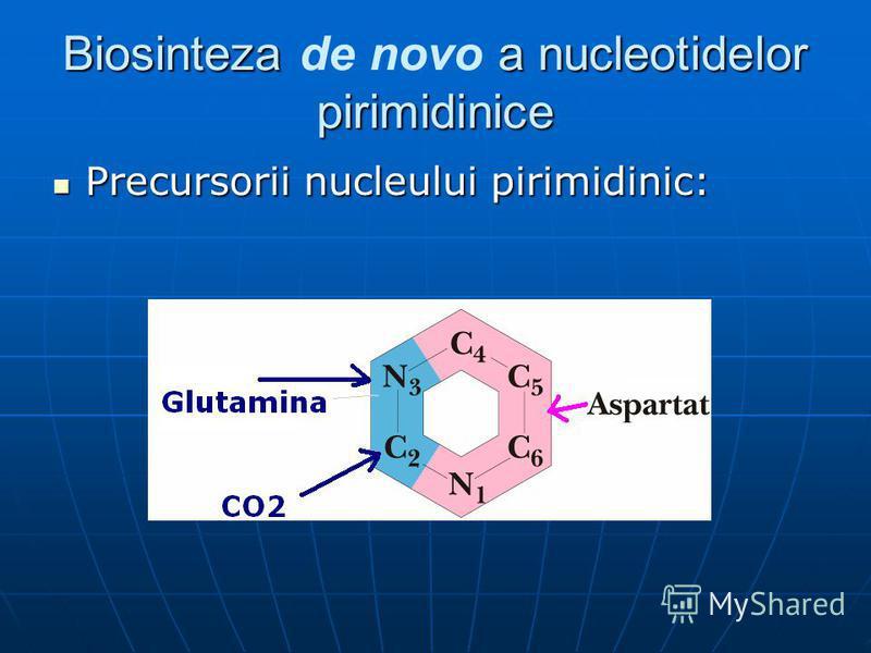 Biosinteza a nucleotidelor pirimidinice Biosinteza de novo a nucleotidelor pirimidinice Precursorii nucleului pirimidinic: Precursorii nucleului pirimidinic: