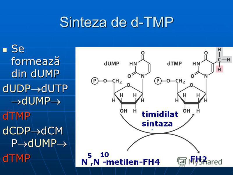 Sinteza de d-TMP Se formează din dUMP Se formează din dUMP dUDPdUTPdUMP dTMP dCDPdCM PdUMP dTMP