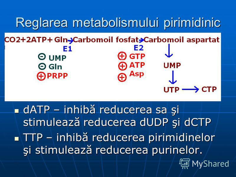 Reglarea metabolismului pirimidinic dATP – inhibă reducerea sa şi stimulează reducerea dUDP şi dCTP dATP – inhibă reducerea sa şi stimulează reducerea dUDP şi dCTP TTP – inhibă reducerea pirimidinelor şi stimulează reducerea purinelor. TTP – inhibă r