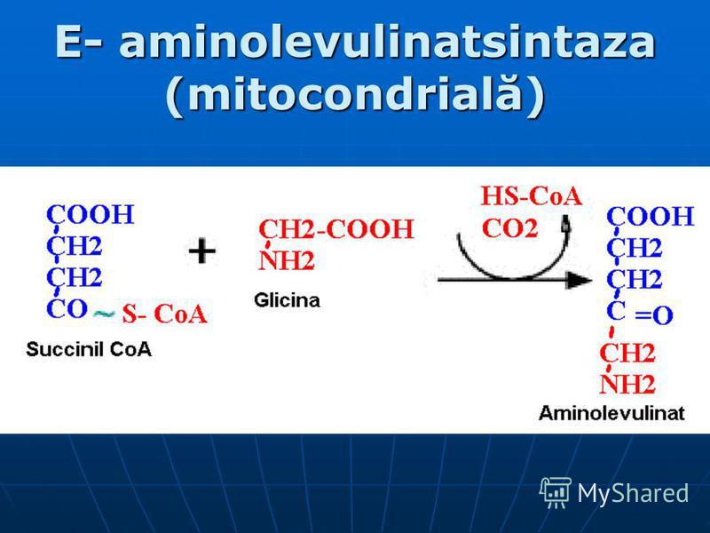 E- aminolevulinatsintaza (mitocondrială)