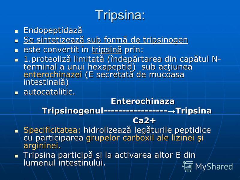 Tripsina: Endopeptidază Endopeptidază Se sintetizează sub formă de tripsinogen Se sintetizează sub formă de tripsinogen este convertit în tripsină prin: este convertit în tripsină prin: 1.proteoliză limitată (îndepărtarea din capătul N- terminal a un