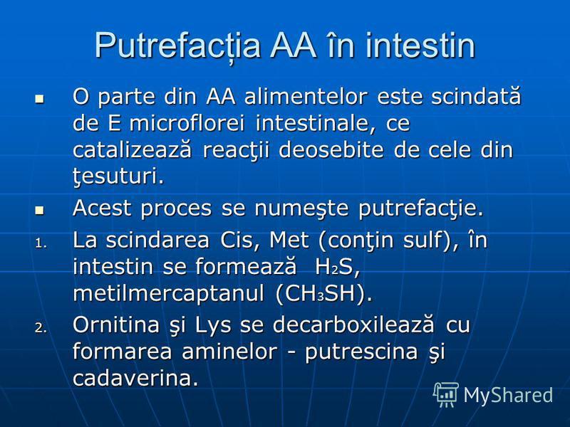 Putrefacţia AA în intestin O parte din AA alimentelor este scindată de E microflorei intestinale, ce catalizează reacţii deosebite de cele din ţesuturi. O parte din AA alimentelor este scindată de E microflorei intestinale, ce catalizează reacţii deo