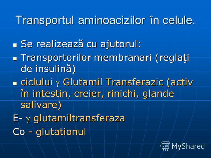 Transportul aminoacizilor în celule. Se realizează cu ajutorul: Se realizează cu ajutorul: Transportorilor membranari (reglaţi de insulină) Transportorilor membranari (reglaţi de insulină) ciclului Glutamil Transferazic (activ în intestin, creier, ri