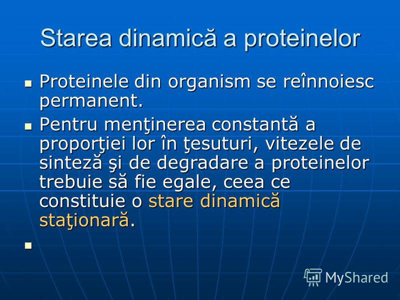 Starea dinamică a proteinelor Proteinele din organism se reînnoiesc permanent. Proteinele din organism se reînnoiesc permanent. Pentru menţinerea constantă a proporţiei lor în ţesuturi, vitezele de sinteză şi de degradare a proteinelor trebuie să fie