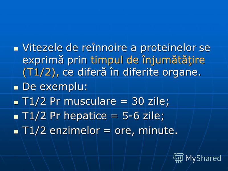 Vitezele de reînnoire a proteinelor se exprimă prin timpul de înjumătăţire (T1/2), ce diferă în diferite organe. Vitezele de reînnoire a proteinelor se exprimă prin timpul de înjumătăţire (T1/2), ce diferă în diferite organe. De exemplu: De exemplu: