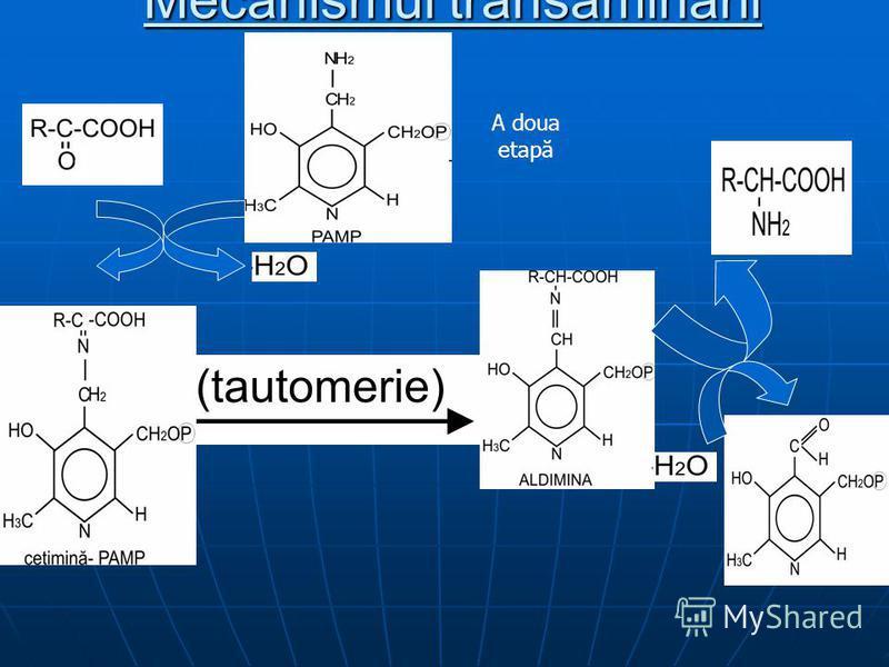 Mecanismul transaminării A doua etapă