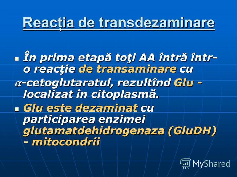 Reacţia de transdezaminare În prima etapă toţi AA întră într- o reacţie de transaminare cu În prima etapă toţi AA întră într- o reacţie de transaminare cu -cetoglutaratul, rezultînd Glu - localizat în citoplasmă.-cetoglutaratul, rezultînd Glu - local