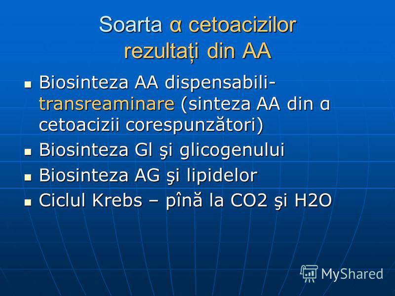 Soarta α cetoacizilor rezultaţi din AA Biosinteza AA dispensabili- transreaminare (sinteza AA din α cetoacizii corespunzători) Biosinteza AA dispensabili- transreaminare (sinteza AA din α cetoacizii corespunzători) Biosinteza Gl şi glicogenului Biosi