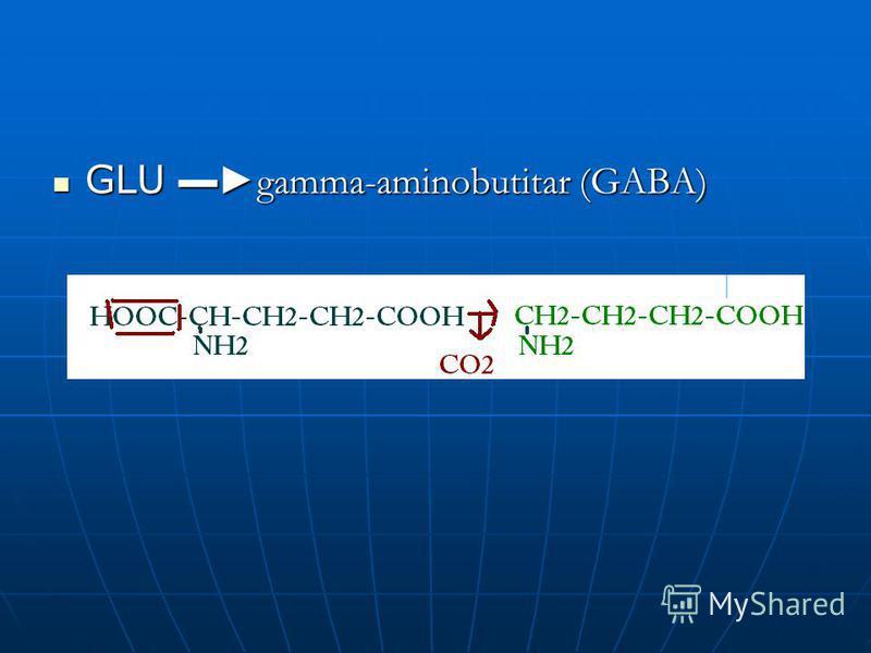 GLU gamma-aminobutitar (GABA) GLU gamma-aminobutitar (GABA)