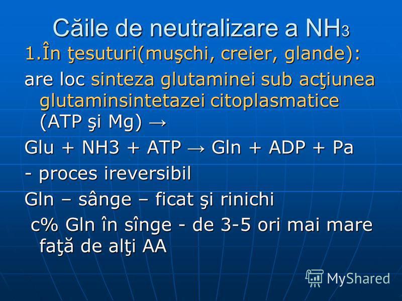 Căile de neutralizare a NH 3 1.În ţesuturi(muşchi, creier, glande): are loc sinteza glutaminei sub acţiunea glutaminsintetazei citoplasmatice (ATP şi Mg) are loc sinteza glutaminei sub acţiunea glutaminsintetazei citoplasmatice (ATP şi Mg) Glu + NH3