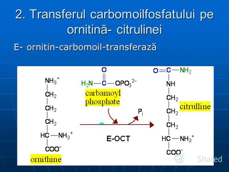 2. Transferul carbomoilfosfatului pe ornitină- citrulinei E- ornitin-carbomoil-transferază