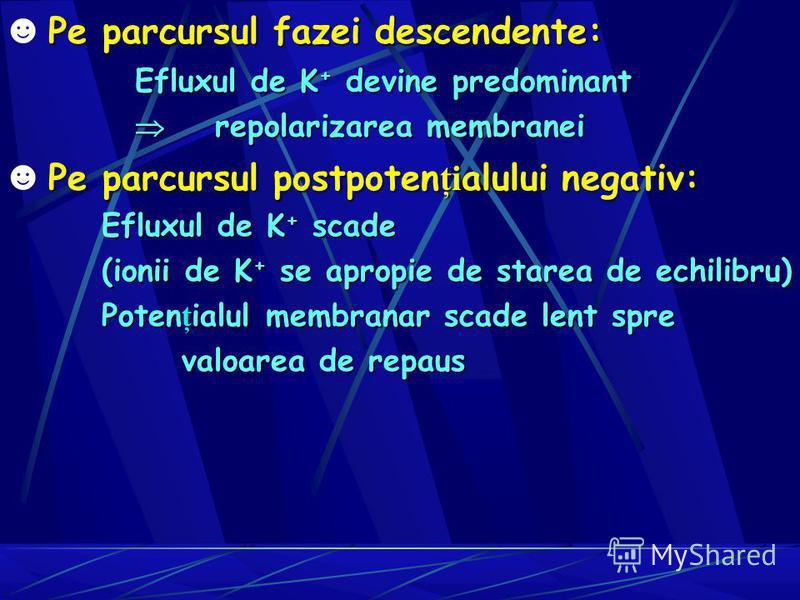 Pe parcursul fazei descendente: Efluxul de K + devine predominant repolarizarea membranei repolarizarea membranei Pe parcursul postpoten ţi alului negativ: Efluxul de K+ scade (ionii de K+ se apropie de starea de echilibru) Potenţialul membranar scad