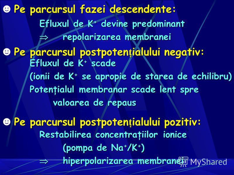 Pe parcursul fazei descendente: Efluxul de K + devine predominant repolarizarea membranei repolarizarea membranei Pe parcursul postpoten ţ ialului negativ: Efluxul de K + scade (ionii de K + se apropie de starea de echilibru) Potenţialul membranar sc