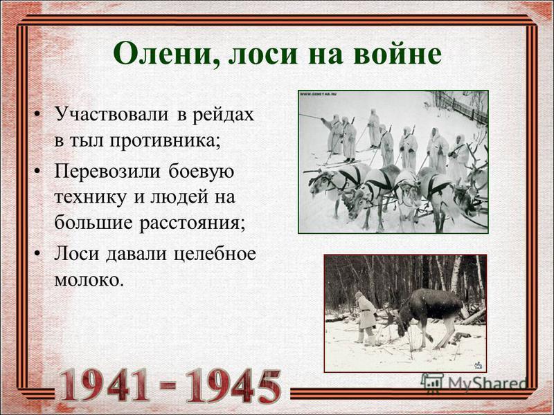 Олени, лоси на войне Участвовали в рейдах в тыл противника; Перевозили боевую технику и людей на большие расстояния; Лоси давали целебное молоко.