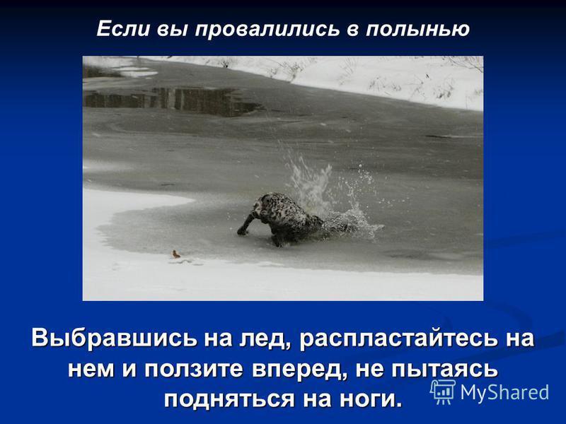 Если вы провалились в полынью Выбравшись на лед, распластайтесь на нем и ползите вперед, не пытаясь подняться на ноги.