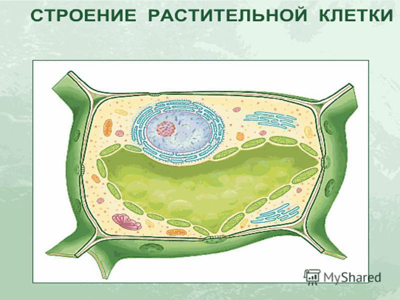 Анимация строения клетки 16