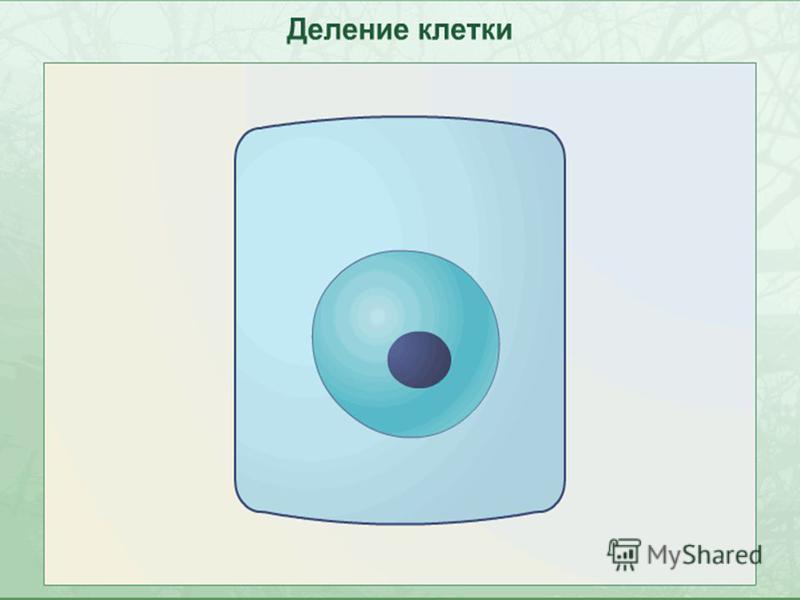 Анимация 5 деление без звука