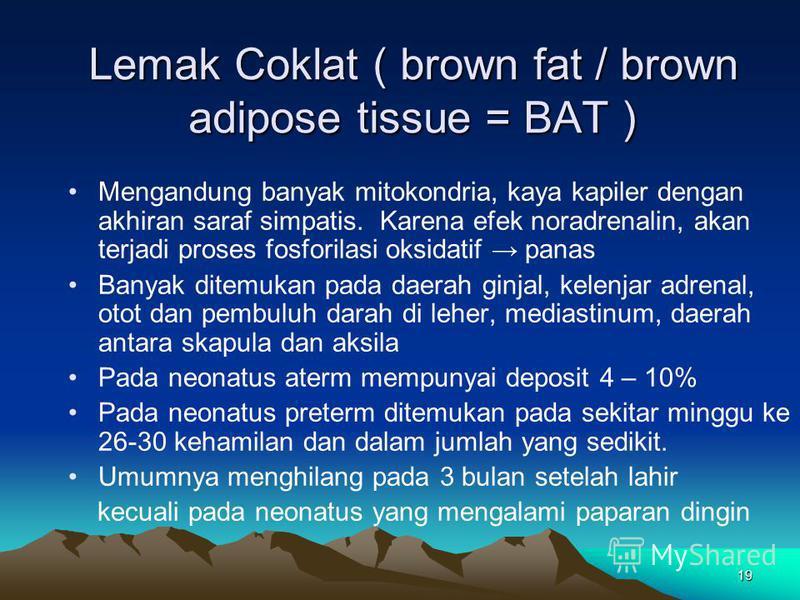 19 Lemak Coklat ( brown fat / brown adipose tissue = BAT ) Mengandung banyak mitokondria, kaya kapiler dengan akhiran saraf simpatis. Karena efek noradrenalin, akan terjadi proses fosforilasi oksidatif panas Banyak ditemukan pada daerah ginjal, kelen