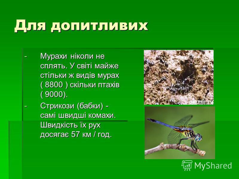Для допитливих -М-М-М-Мурахи ніколи не сплять. У світі майже стільки ж видів мурах ( 8800 ) скільки птахів ( 9000). -С-С-С-Стрикози (бабки) - самі швидші комахи. Швидкість їх рух досягає 57 км / год.