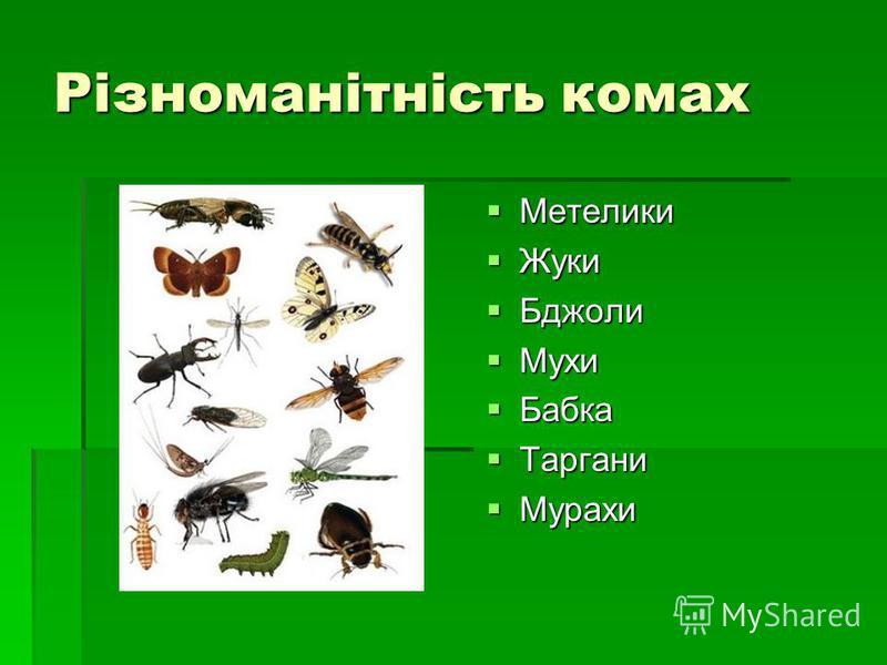 Різноманітність комах Метелики Метелики Жуки Жуки Бджоли Бджоли Мухи Мухи Бабка Бабка Таргани Таргани Мурахи Мурахи