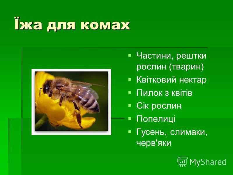 Їжа для комах Частини, рештки рослин (тварин) Квітковий нектар Пилок з квітів Сік рослин Попелиці Гусень, слимаки, черв'яки