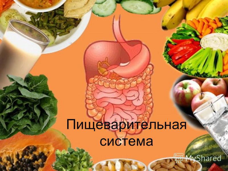 Гастроэнтерология питание