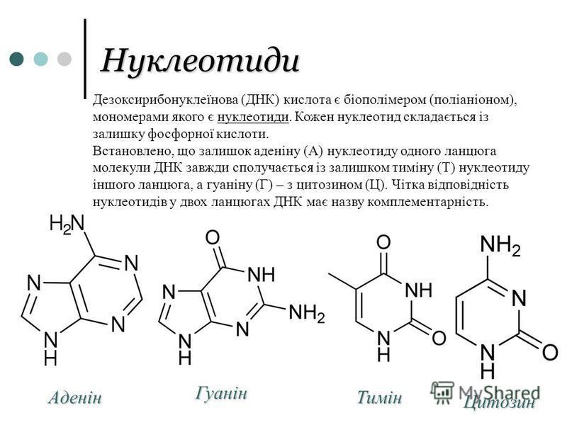 Нуклеотиди Аденін Гуанін Тимін Цитозин Дезоксирибонуклеїнова (ДНК) кислота є біополімером (поліаніоном), мономерами якого є нуклеотиди. Кожен нуклеотид складається із залишку фосфорної кислоти. Встановлено, що залишок аденіну (А) нуклеотиду одного ла