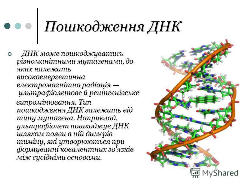 Пошкодження ДНК ДНК може пошкоджуватись різноманітними мутагенами, до яких належать високоенергетична електромагнітна радіація ультрафіолетове й рентгенівське ДНК може пошкоджуватись різноманітними мутагенами, до яких належать високоенергетична елект