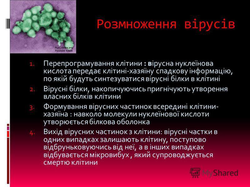 Розмноження вірусів 1. Перепрограмування клітини : вірусна нуклеїнова кислота передає клітині-хазяїну спадкову інформацію, по якій будуть синтезуватися вірусні білки в клітині 2. Вірусні білки, накопичуючись пригнічують утворення власних білків кліти