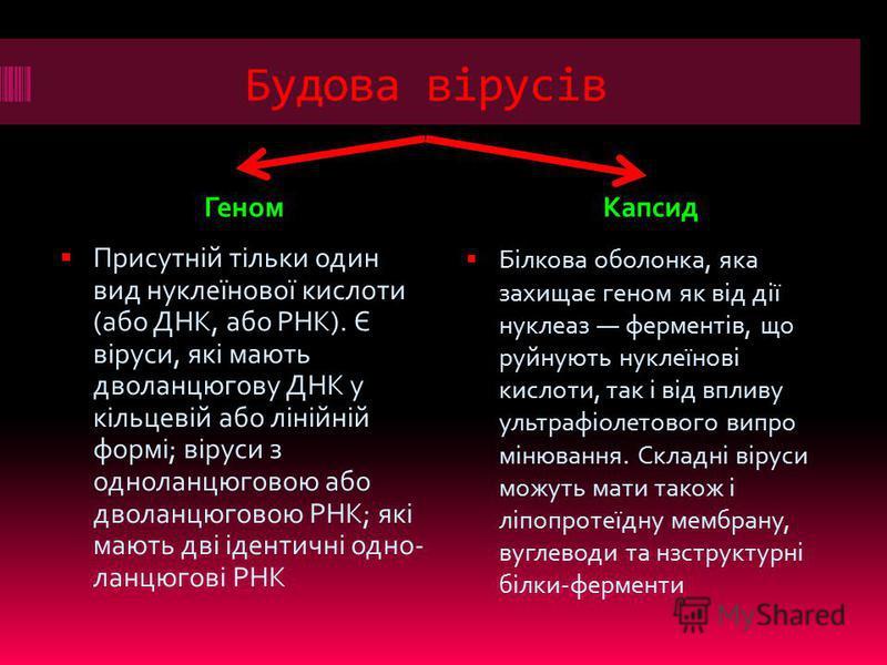 Будова вірусів ГеномКапсид Присутній тільки один вид нуклеїнової кислоти (або ДНК, або РНК). Є віруси, які мають дволанцюгову ДНК у кільцевій або лінійній формі; віруси з одноланцюговою або дволанцюговою РНК; які мають дві ідентичні одно- ланцюгові Р
