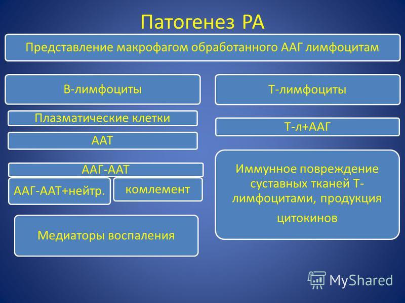 Патогенез РА Представление макрофагом обработанного ААГ лимфоцитам B-лимфоциты Плазматические клетки ААТ ААГ-ААТ ААГ-ААТ+нейтр. комлемент T-лимфоциты T-л+ААГ Иммунное повреждение суставных тканей T- лимфоцитами, продукция цитокинов Медиаторы воспален