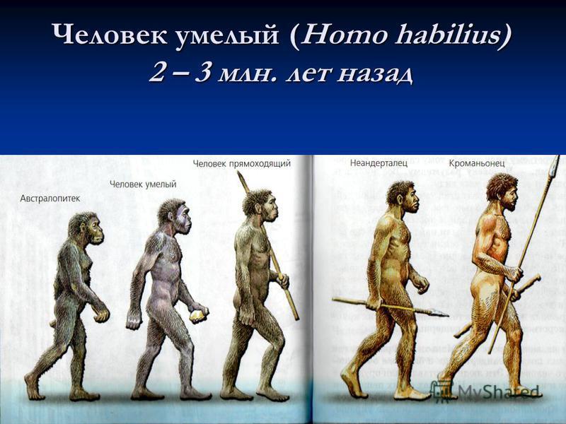 Урок биологии на тему эволюция человека