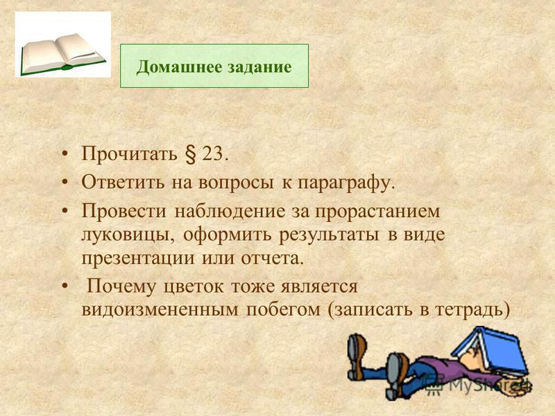 Прочитать § 23. Ответить на вопросы к параграфу. Провести наблюдение за прорастанием луковицы, оформить результаты в виде презентации или отчета. Почему цветок тоже является видоизмененным побегом (записать в тетрадь) Домашнее задание