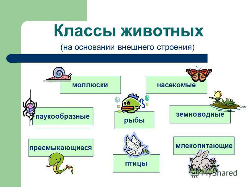 Классы животных моллюски насекомые паукообразные рыбы земноводные пресмыкающиеся птицы млекопитающие (на основании внешнего строения)