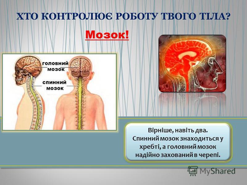 Мозок! Вірніше, навіть два. Спинний мозок знаходиться у хребті, а головний мозок надійно захований в черепі. Вірніше, навіть два. Спинний мозок знаходиться у хребті, а головний мозок надійно захований в черепі. головний мозок спинний мозок ХТО КОНТРО