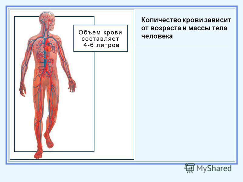 Количество крови зависит от возраста и массы тела человека