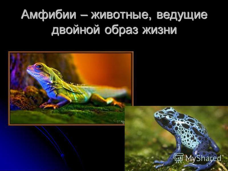 Амфибии – животные, ведущие двойной образ жизни