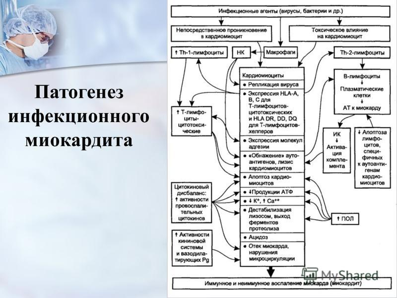 Патогенез инфекционного миокардита