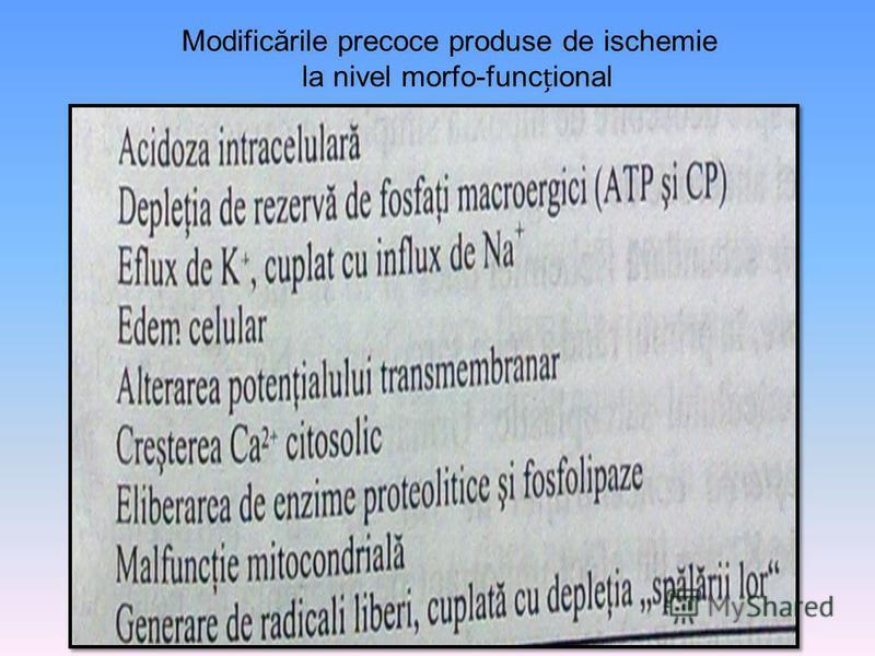 Modificările precoce produse de ischemie la nivel morfo-funcional